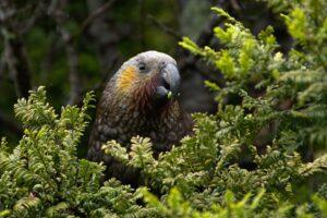 utrata bioróżnorodności wśród ptaków