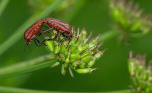 utrata bioróżnorodnoś