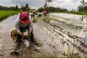 bezpieczeństwo żywnościowe dotyczy w wielkim stopniu rolnictwa i hodowli